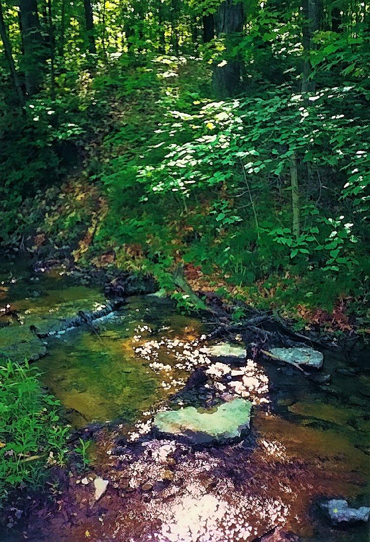 woodland creek in southern indiana