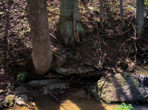 I love trees and rocks
