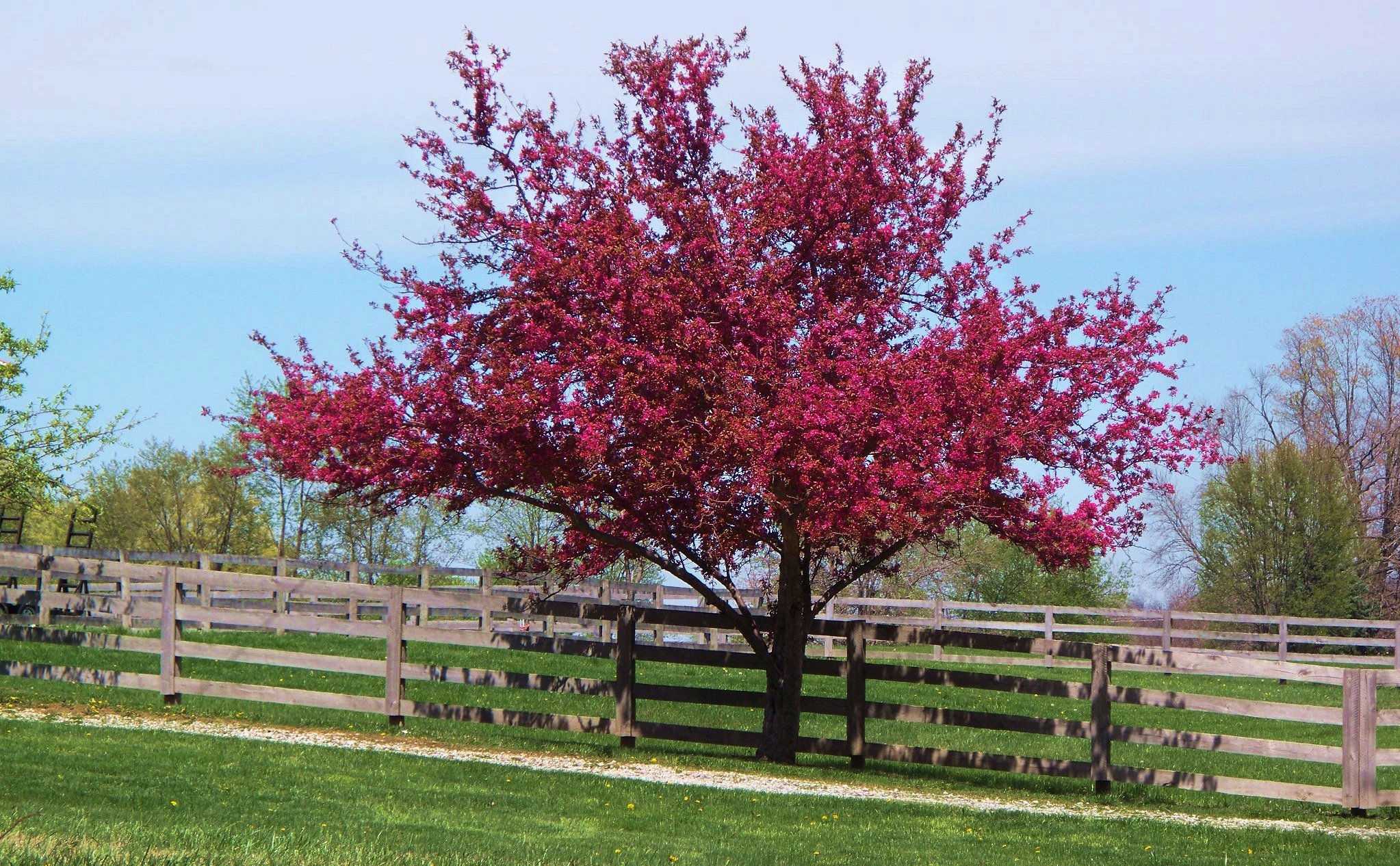 a personal memory about a crabapple tree Crabapple farm is rooted in principles of ecological stewardship and societal health it is a family farm, run by tevis and rachel robertson-goldberg and sally and bill stites-robertson a personal connection with your food, your farm, and your farmers is the best way to assure a healthy food supply.