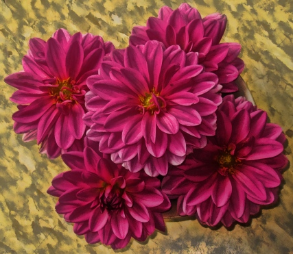 dahlia-blooms-in-shallow-dish