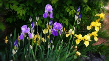 iris_sparkling_colors
