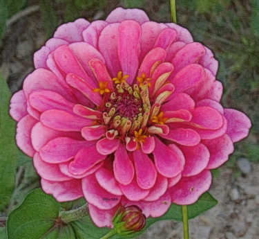awesome-pink-zinn