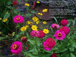 zinnias-and-coreopsis