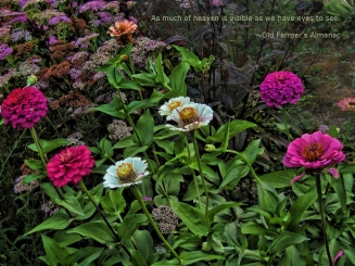 zinnias-heaven-always