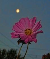 cosmos-under-moon