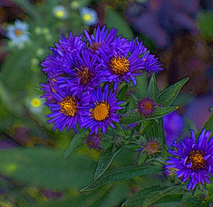 purple-aster-trying-for-a-professional-look-ha-ha-signed