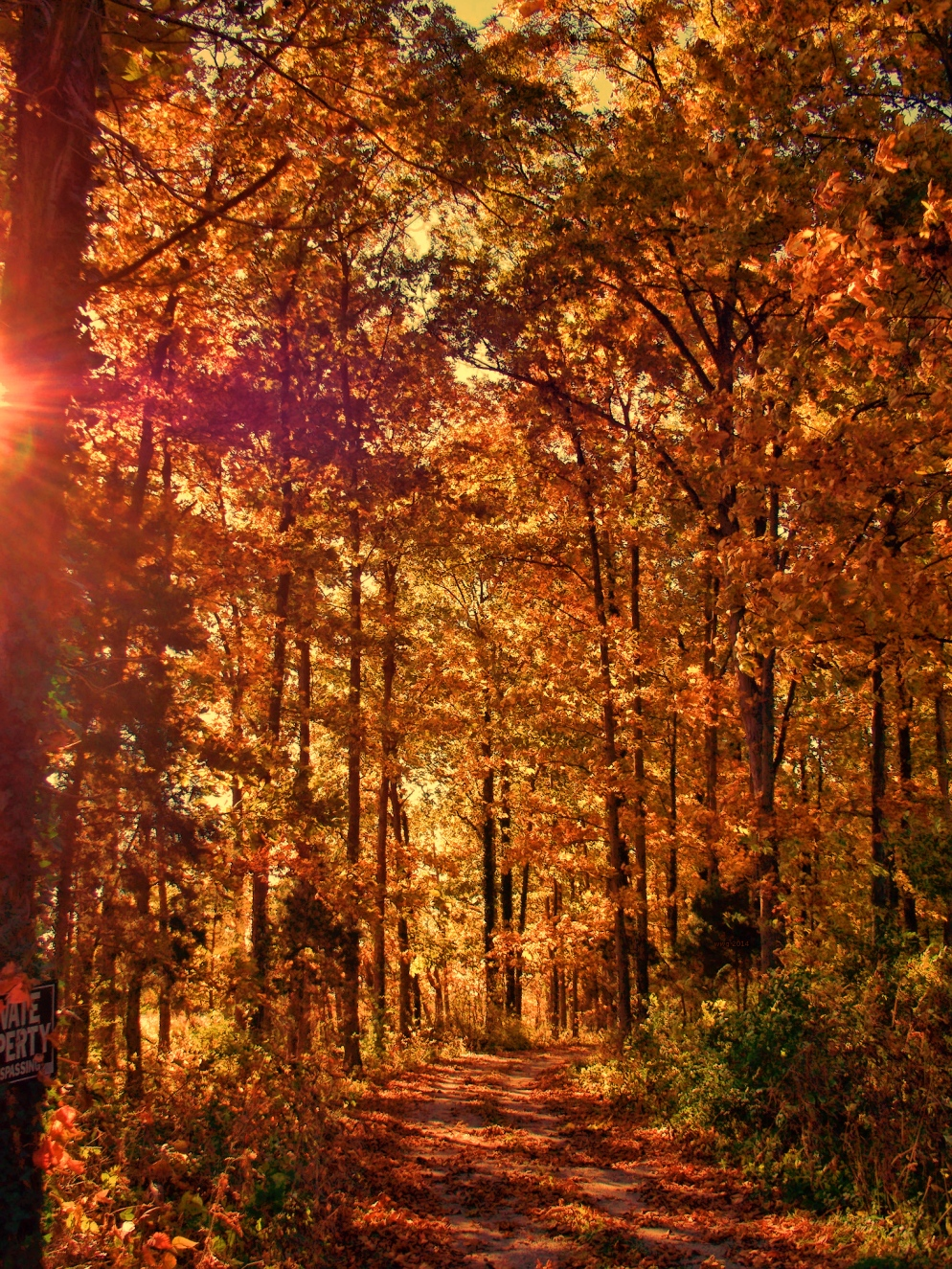 nicepathway-in-october-woods