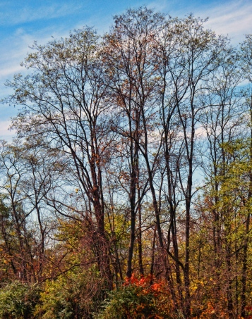 almost-bare-trees