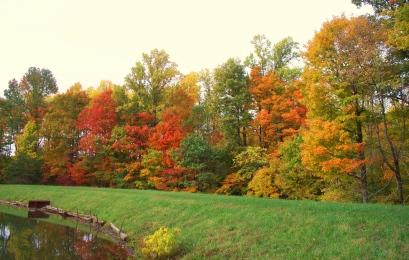 beautiful-trees2