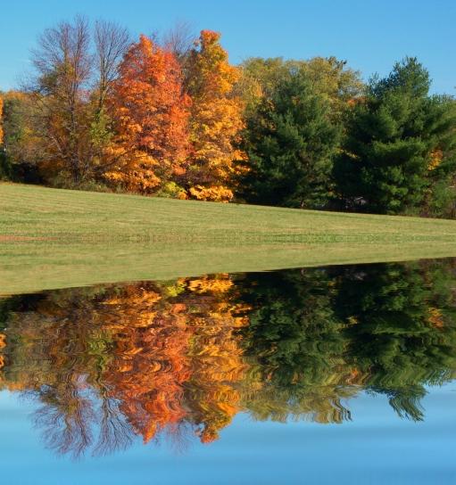 cem-trees-beside-still-waters