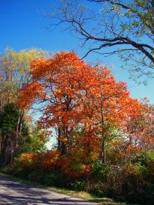 cemetery-tree