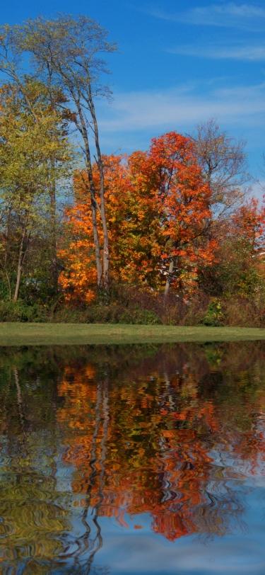 cemetery-trees-beside-still-waters