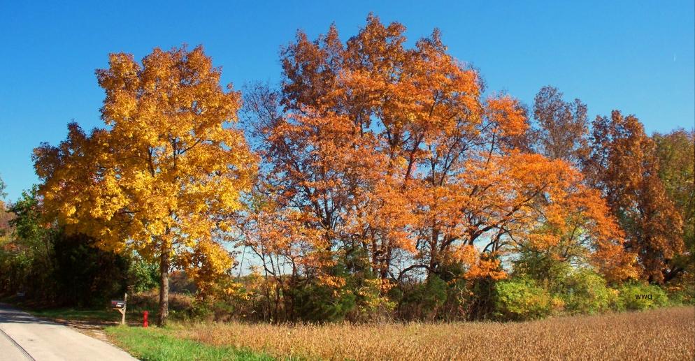 hedgerow-in-bright-sun
