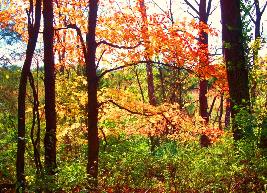 westering-sun-thru-trees-2