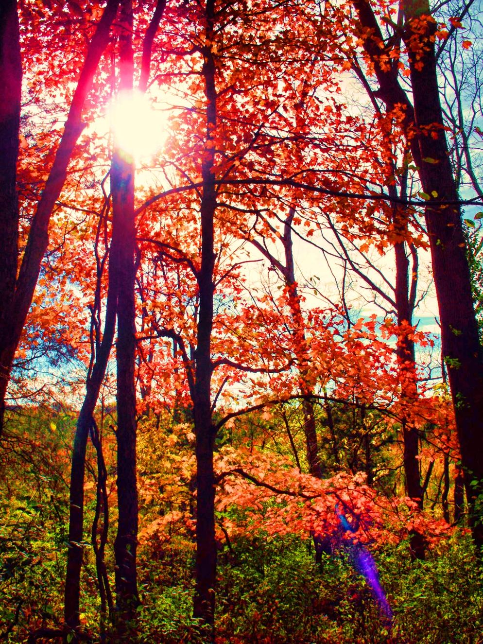 westering-sun-thru-trees
